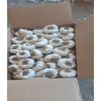 Biały czosnek z Egiptu, 5 cm długości, wysłany w pudełkach kartonowych